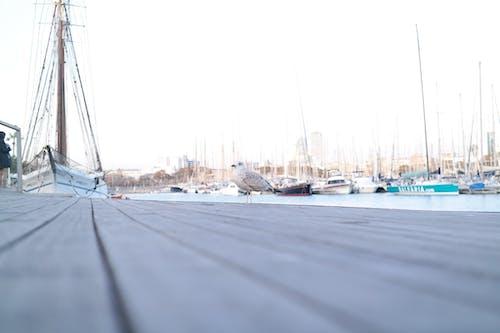 Fotobanka sbezplatnými fotkami na tému čajka, čajky, námorný prístav, plachetnice