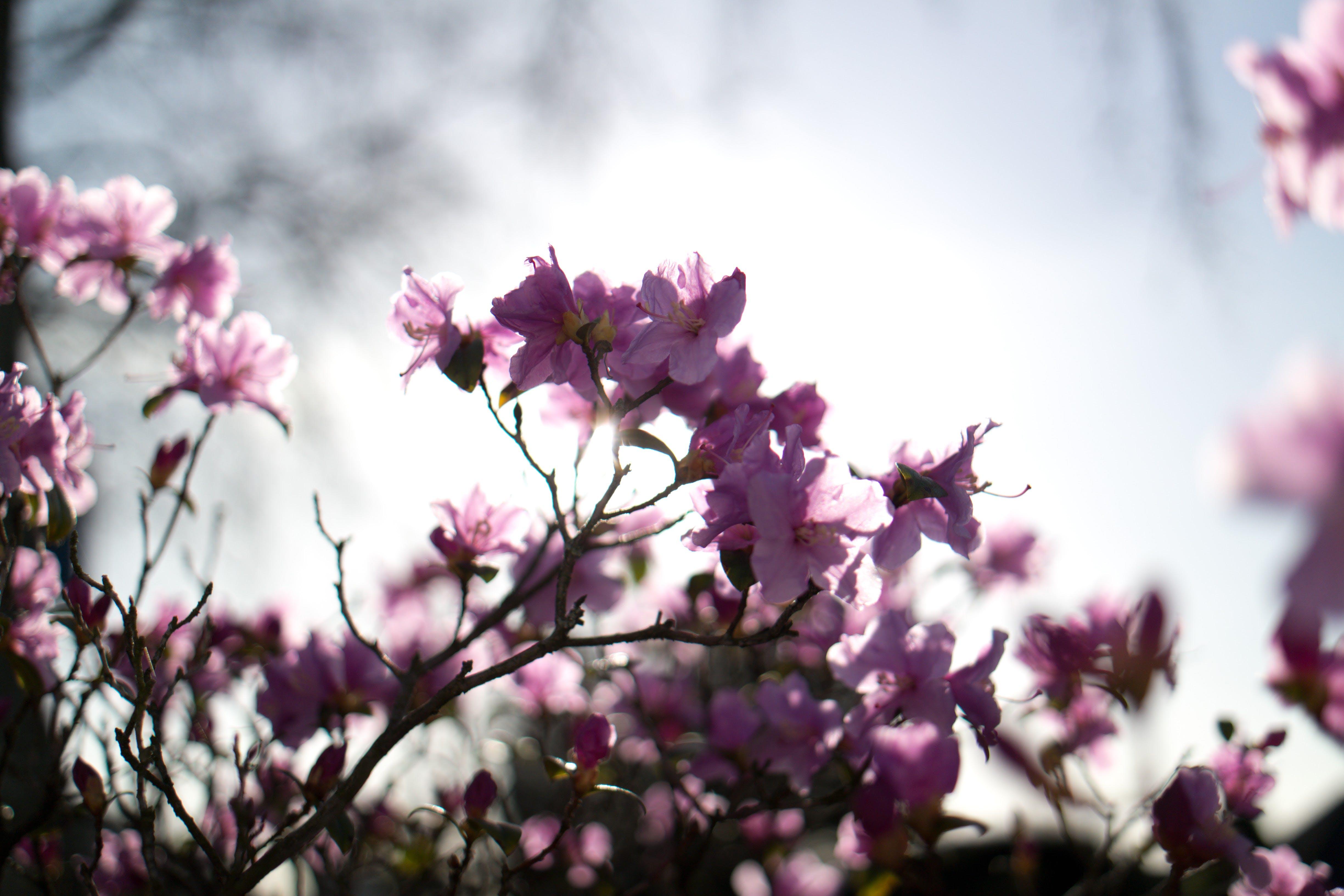 beautiful flowers, flower