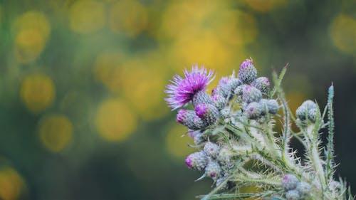 Photos gratuites de arrière-plan flou, botanique, bourgeons, brillant