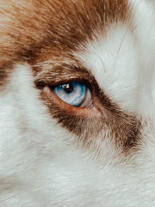 Безкоштовне стокове фото на тему «husky цуценя, білий собака, волосина»
