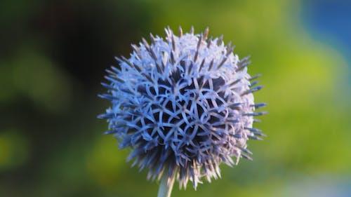 Fotobanka sbezplatnými fotkami na tému kvet, umelé kvety