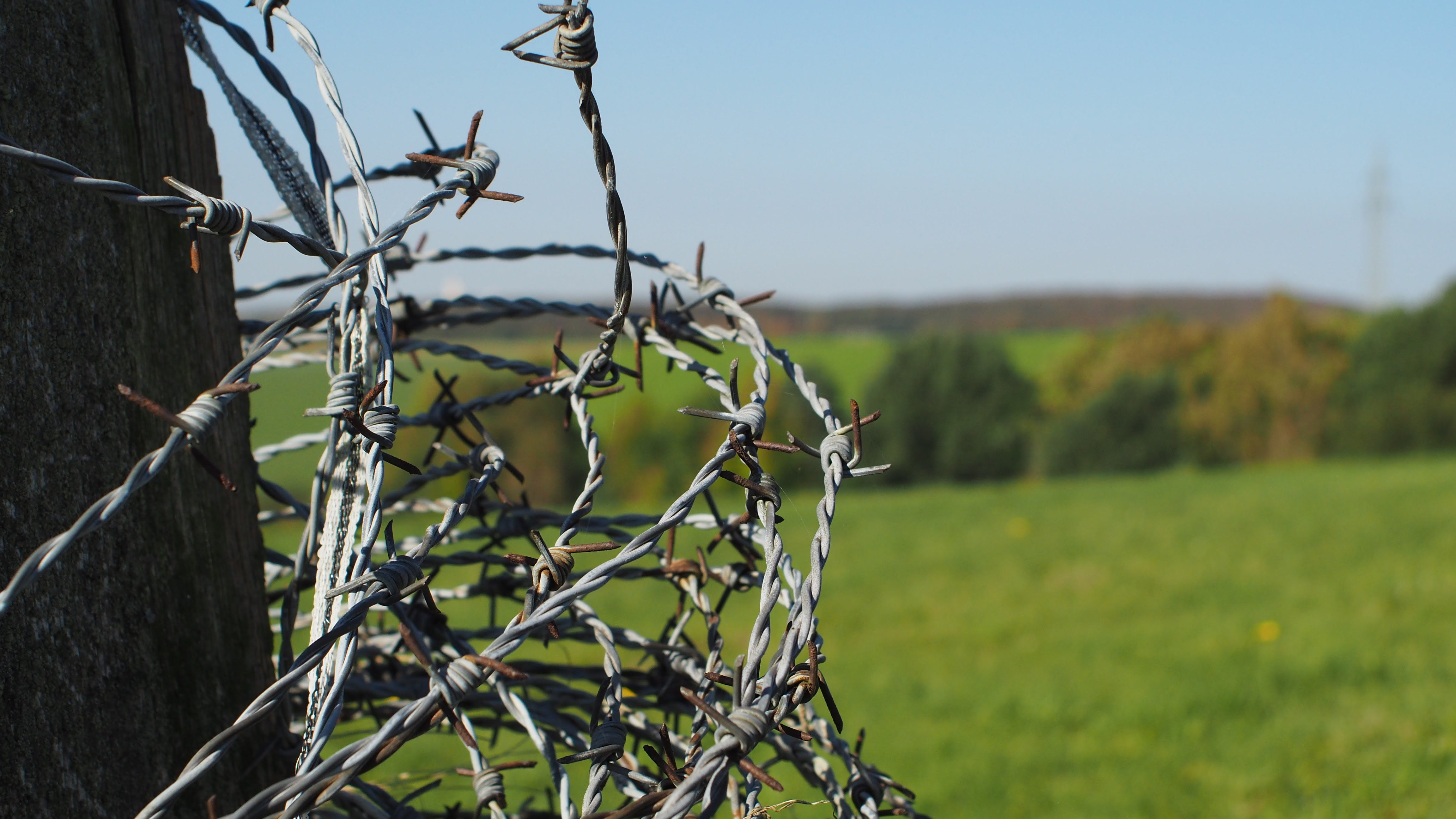 Free stock photo of barbed wire, field, nature
