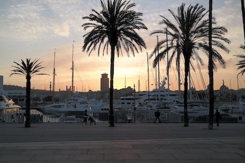 Fotobanka sbezplatnými fotkami na tému Barcelona, námorný prístav, palmy, panoráma mesta