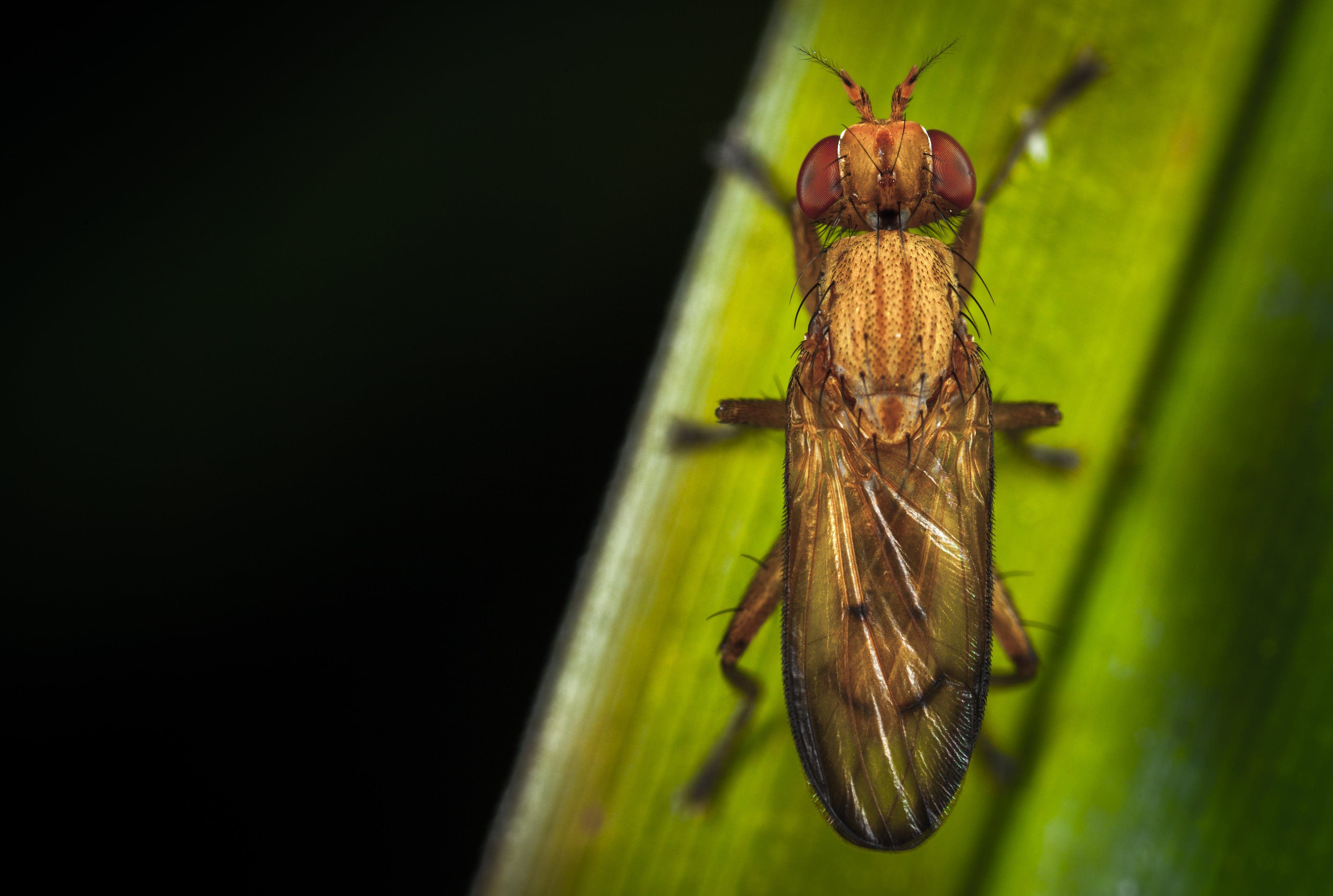 Close-up Photography of Brown Insect Perching on Green Leaf