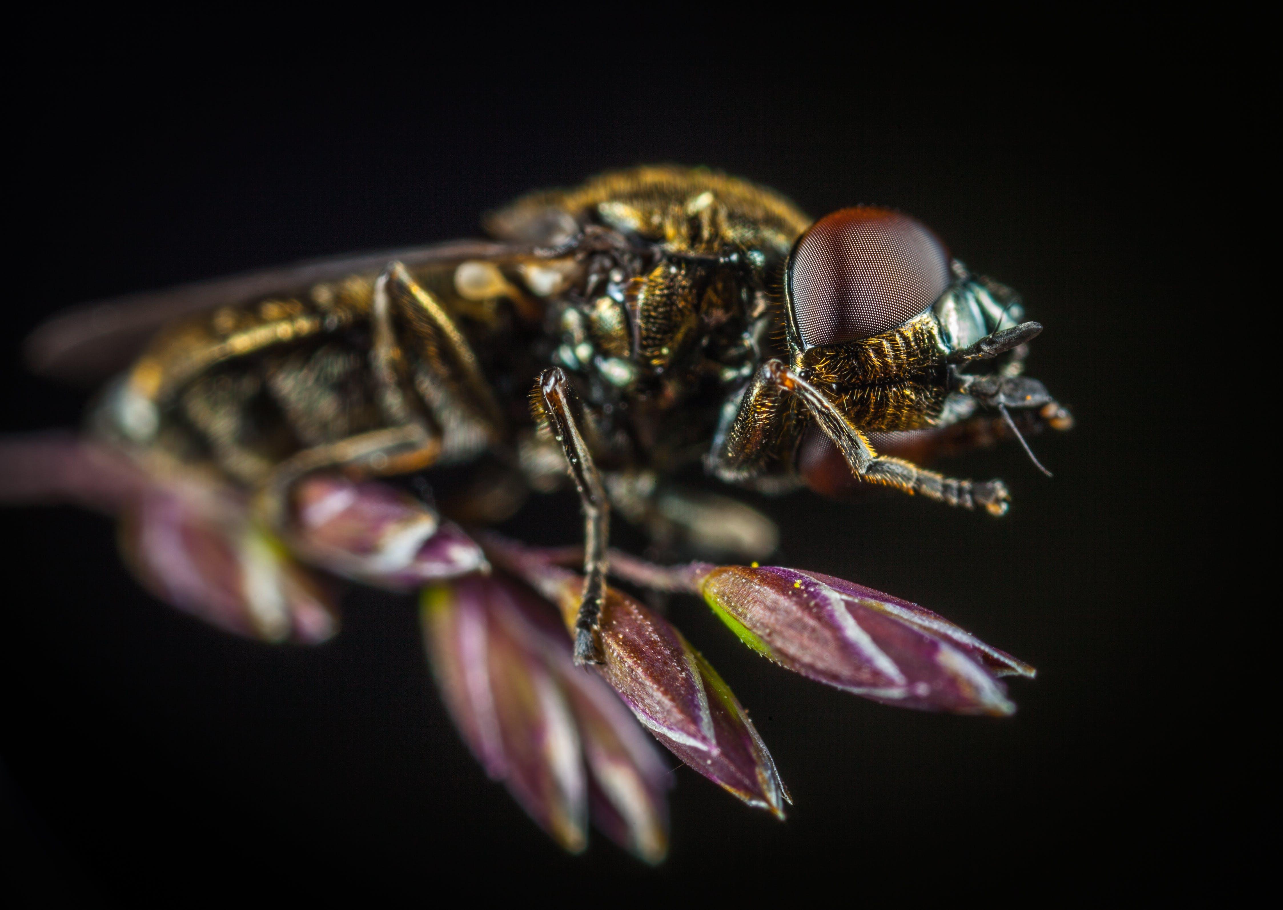 Biyoloji, böcek, böcekbilim, bulanıklık içeren Ücretsiz stok fotoğraf