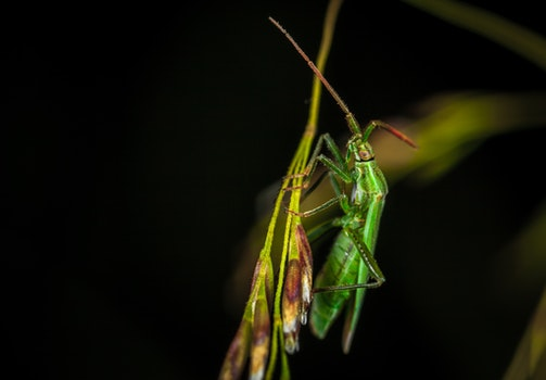 Green Winged Insect Perching on Green Leaf in Close-up Photography