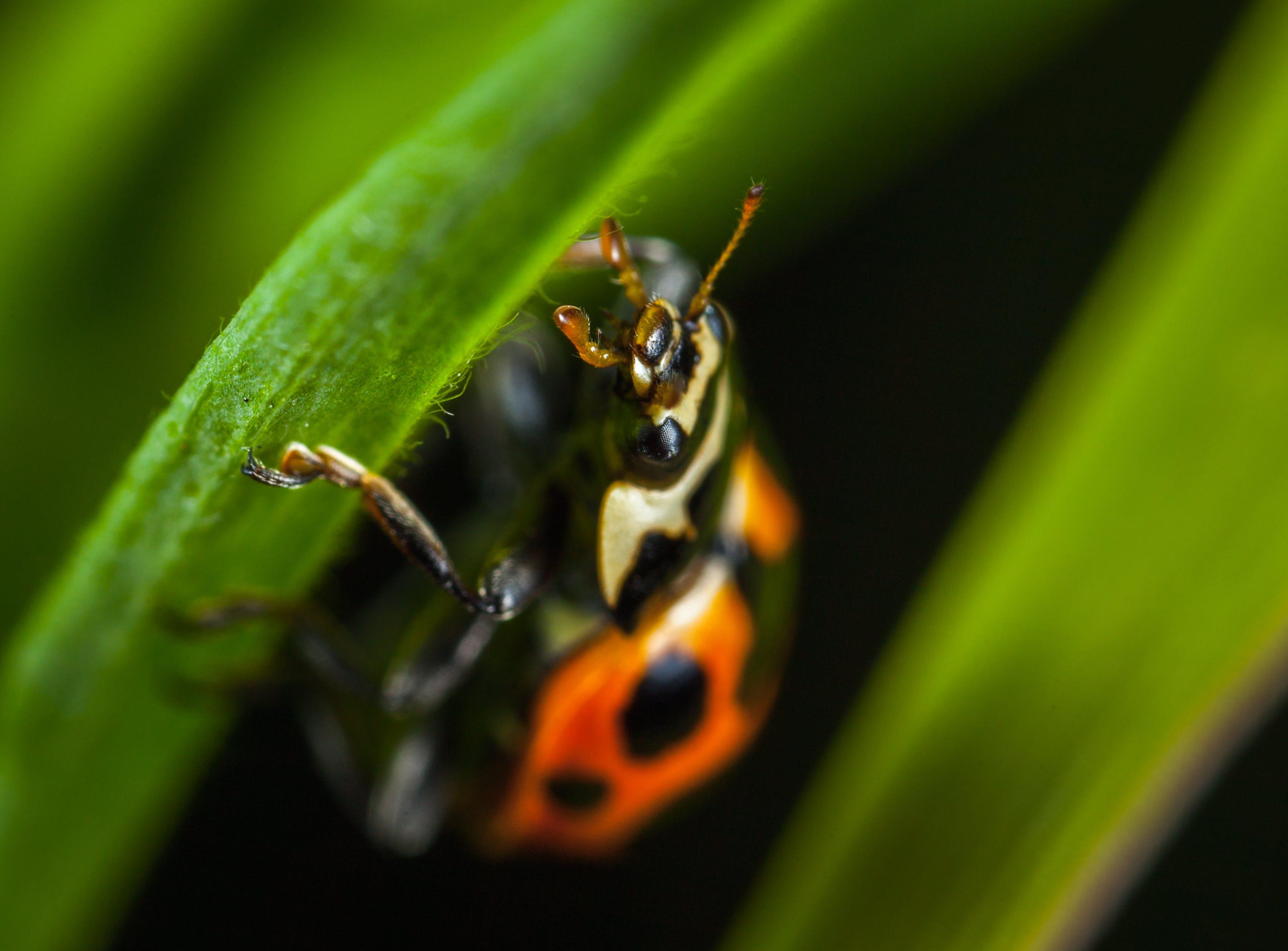 Micro Photography of Orange Ladybug Perching on Leaf
