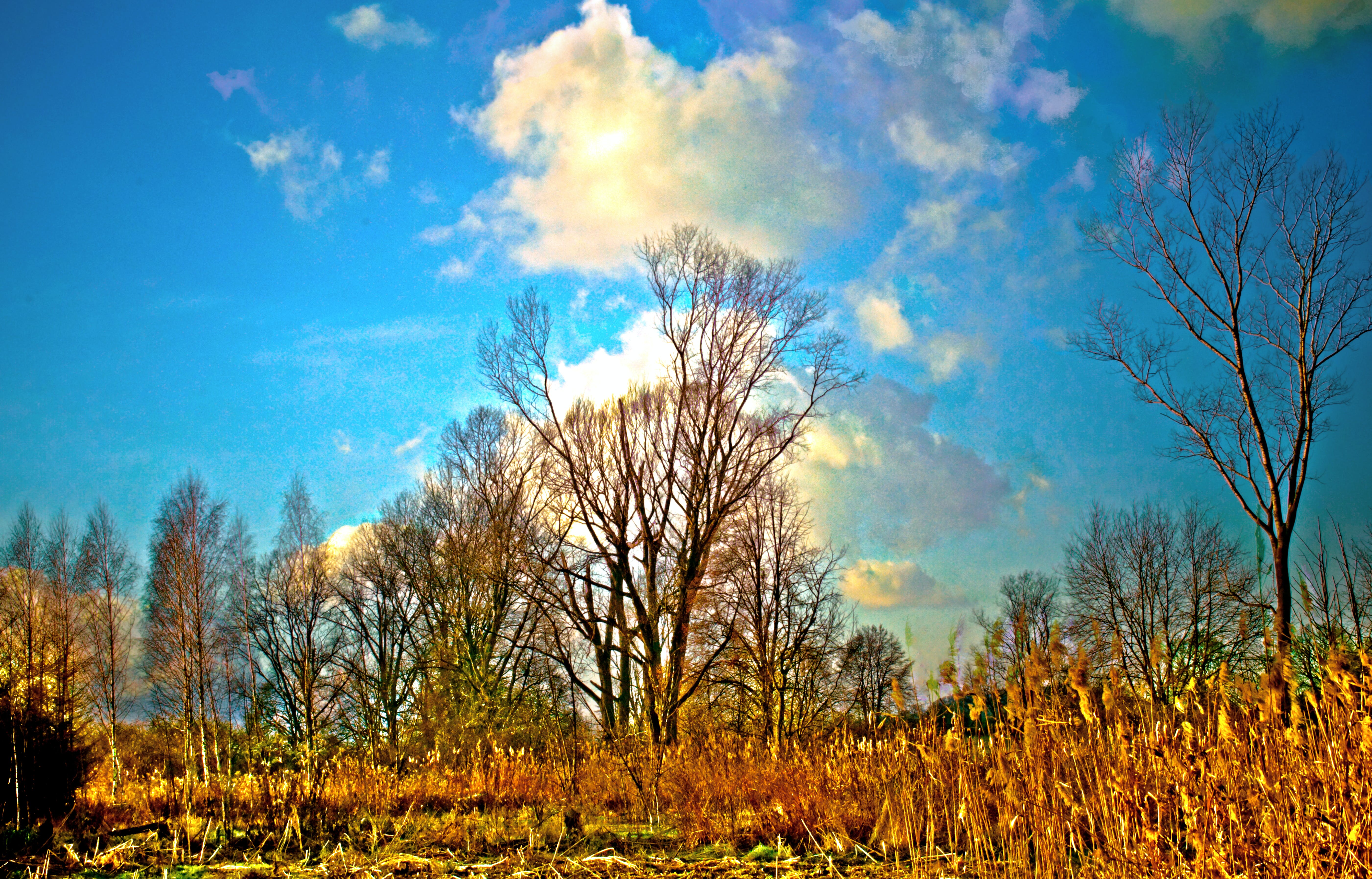 Free stock photo of tree, hdr, boggy