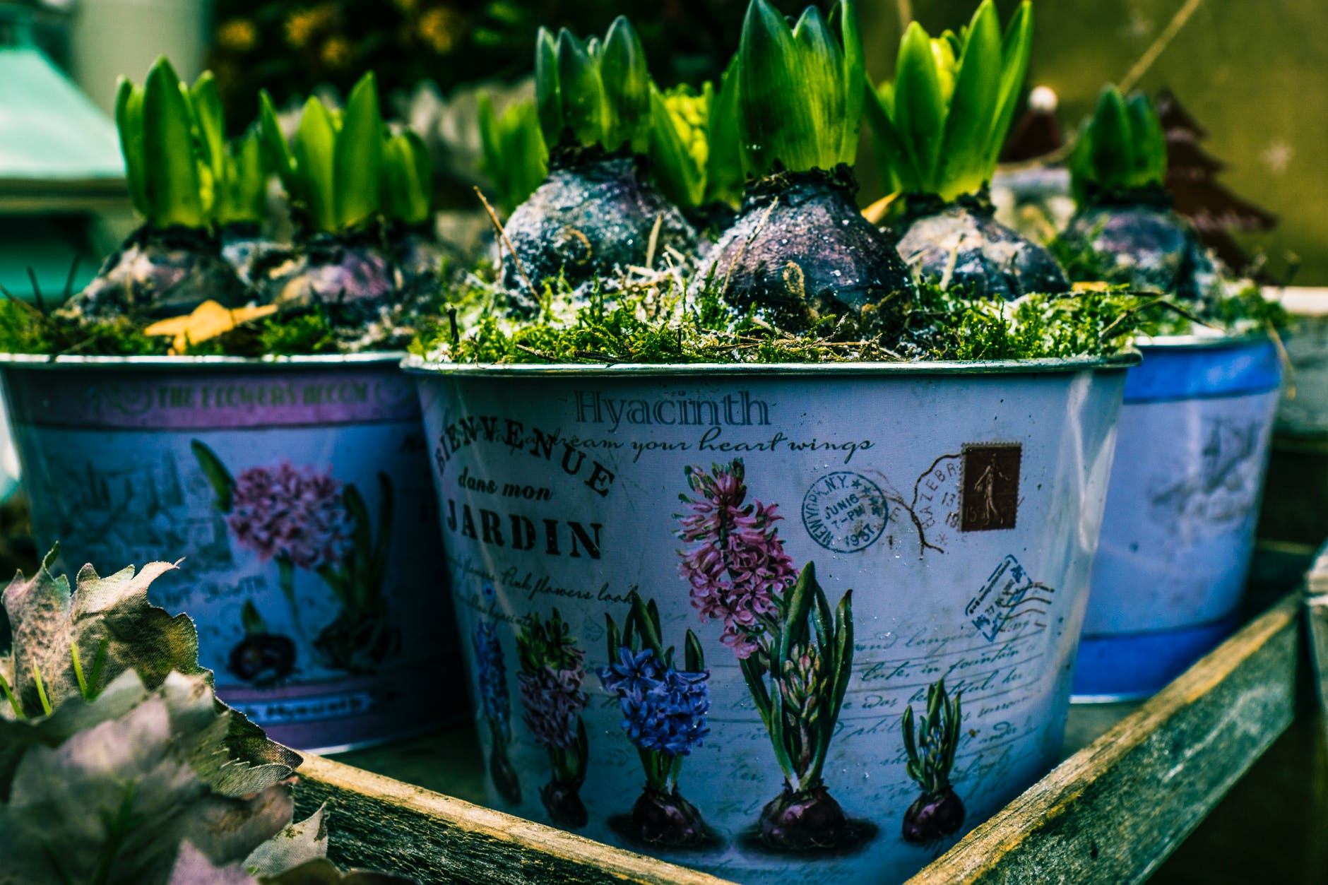 9 Smart Ways To Grow Your Own Food So You Can Save Money