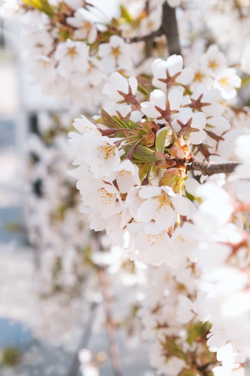 Free stock photo of beautiful nature, bloom, blooming