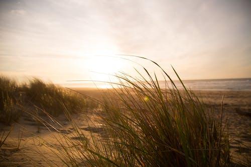 Foto d'estoc gratuïta de duna, herba, mar, platja