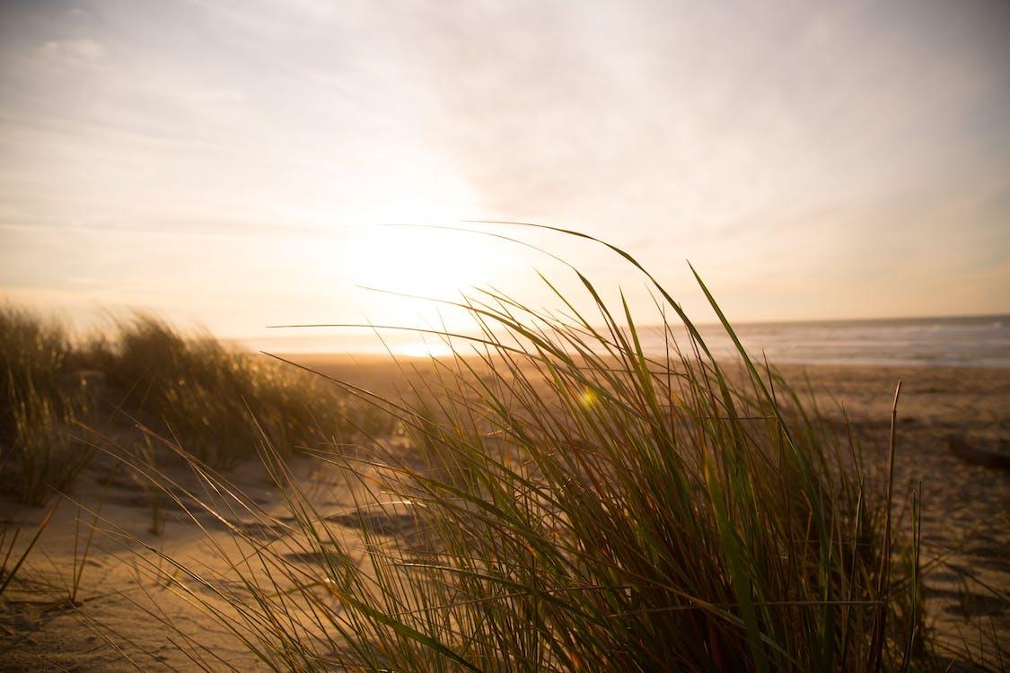 césped, duna, hierba