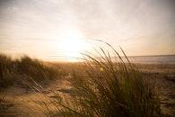 sea, beach, grass