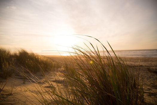 Free stock photo of sea, beach, grass, dune