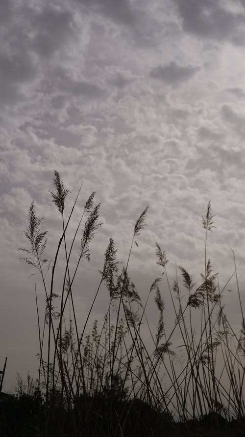White Grass Under Gray Clouds
