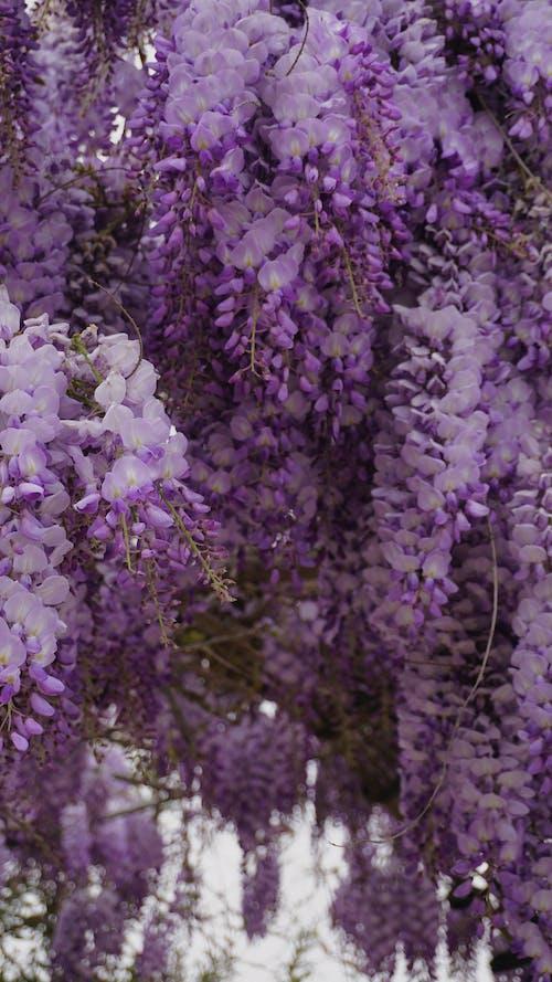 Základová fotografie zdarma na téma barva, botanický, dekorace