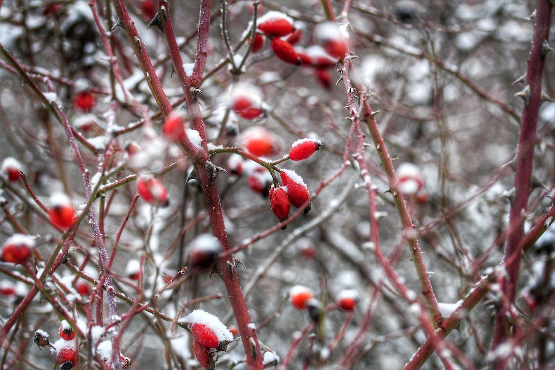 bær, dagslys, farger