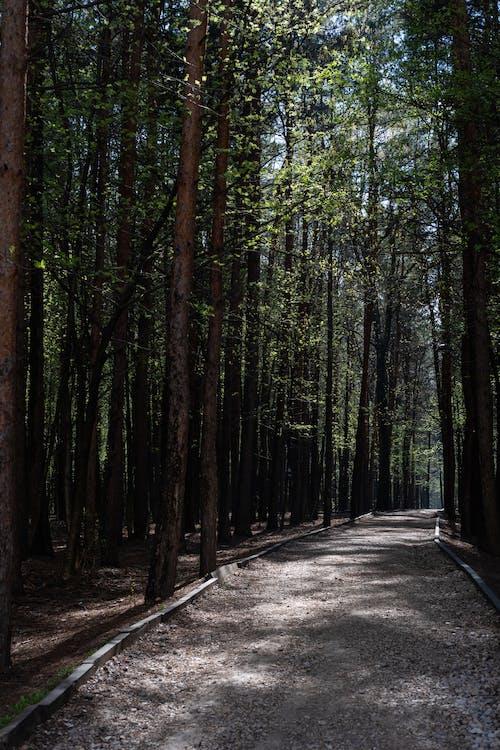 Darmowe zdjęcie z galerii z drzewa, las, na dworze