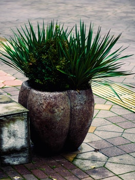 Two Green Leaf Plants
