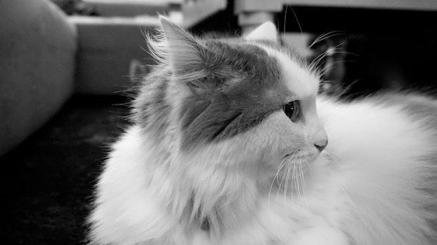 Free stock photo of night, animal, cat, bw