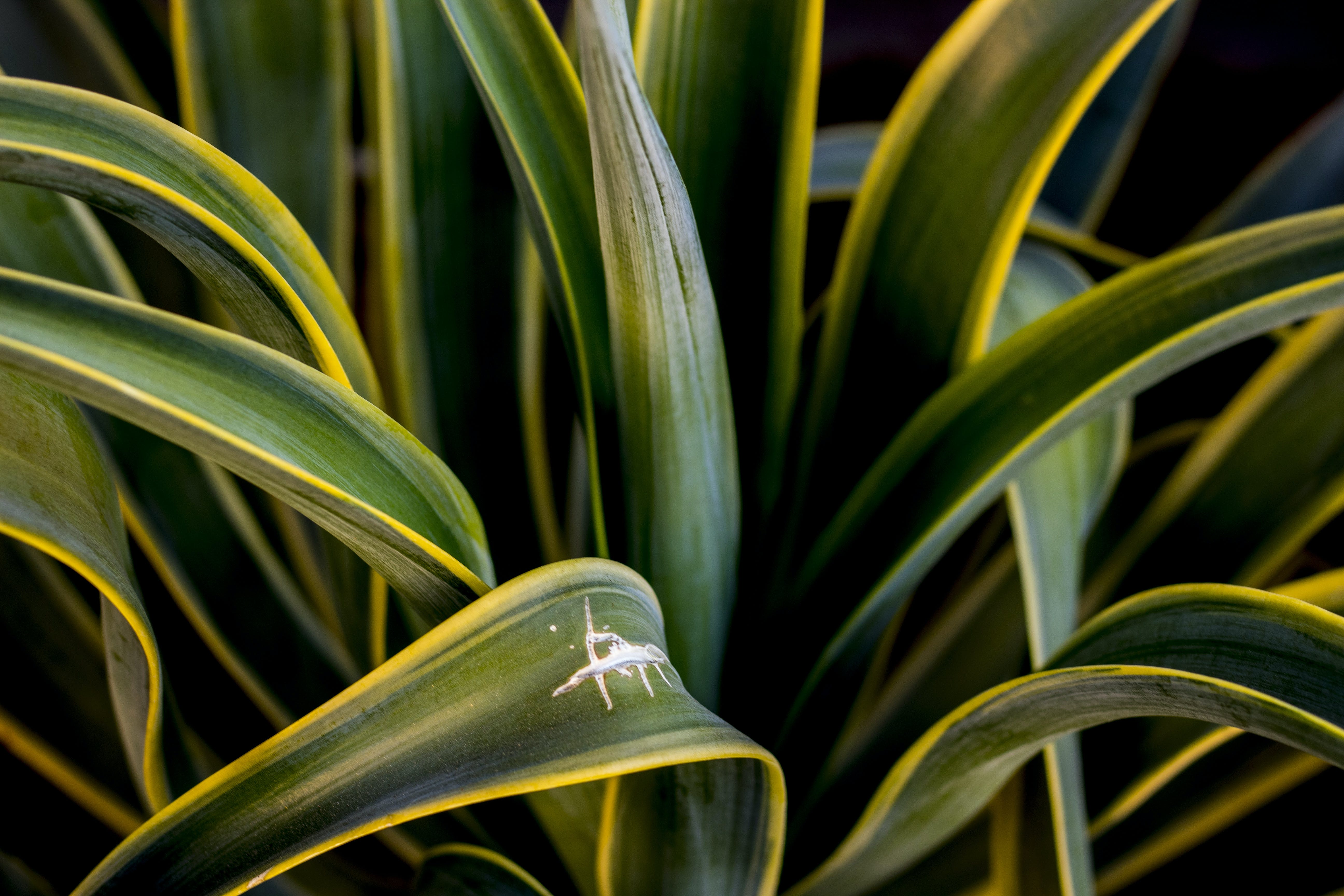 Close-Up Photography of Agave Plant