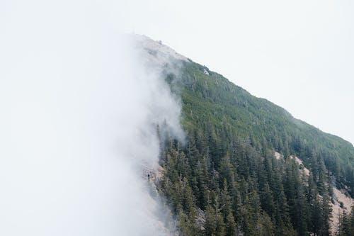 Kostenloses Stock Foto zu baum, berg, dämmerung
