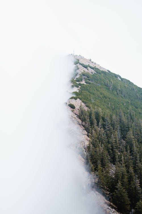 Kostenloses Stock Foto zu baum, berg, draußen