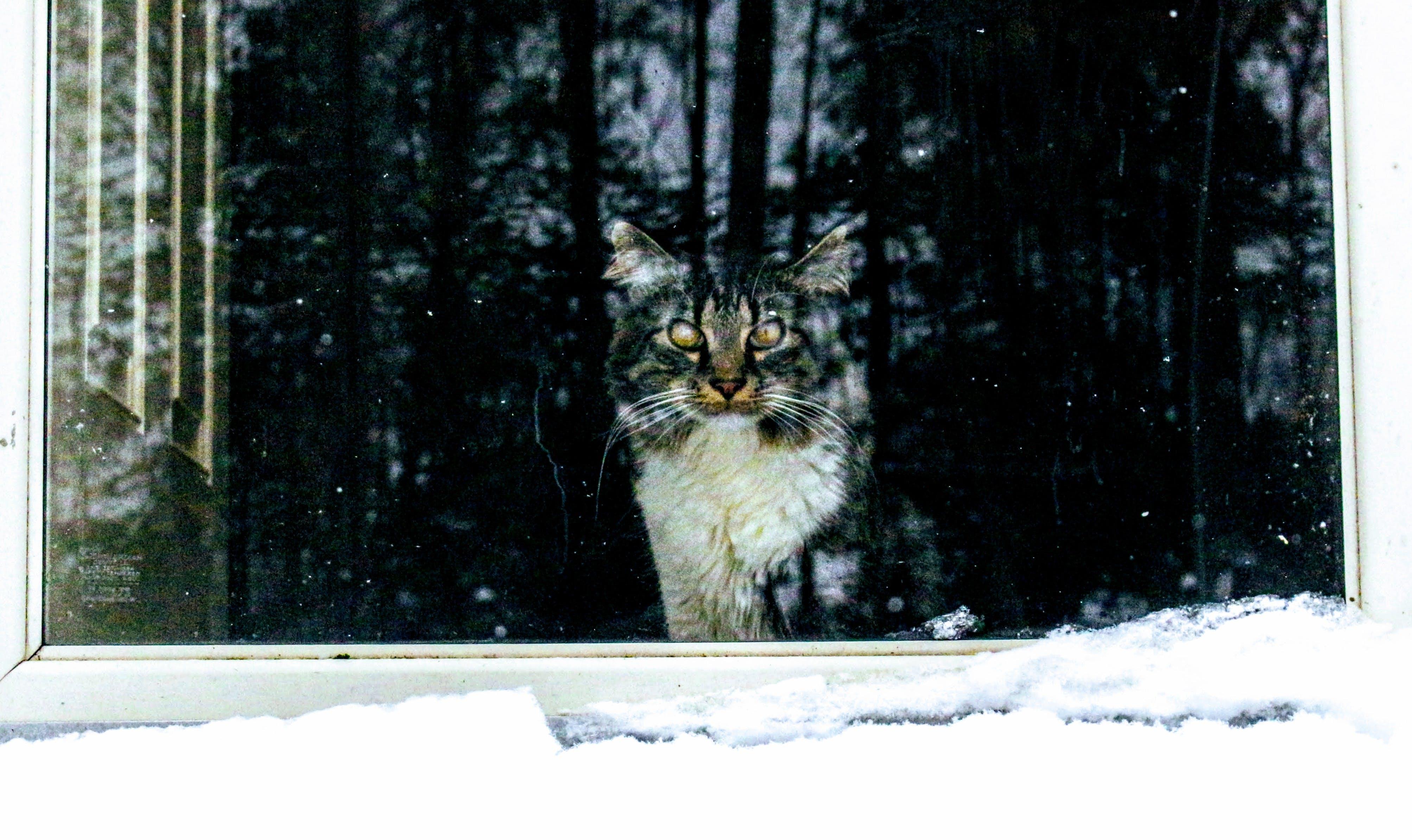 Kostenloses Stock Foto zu kalt, schnee, winter, tier
