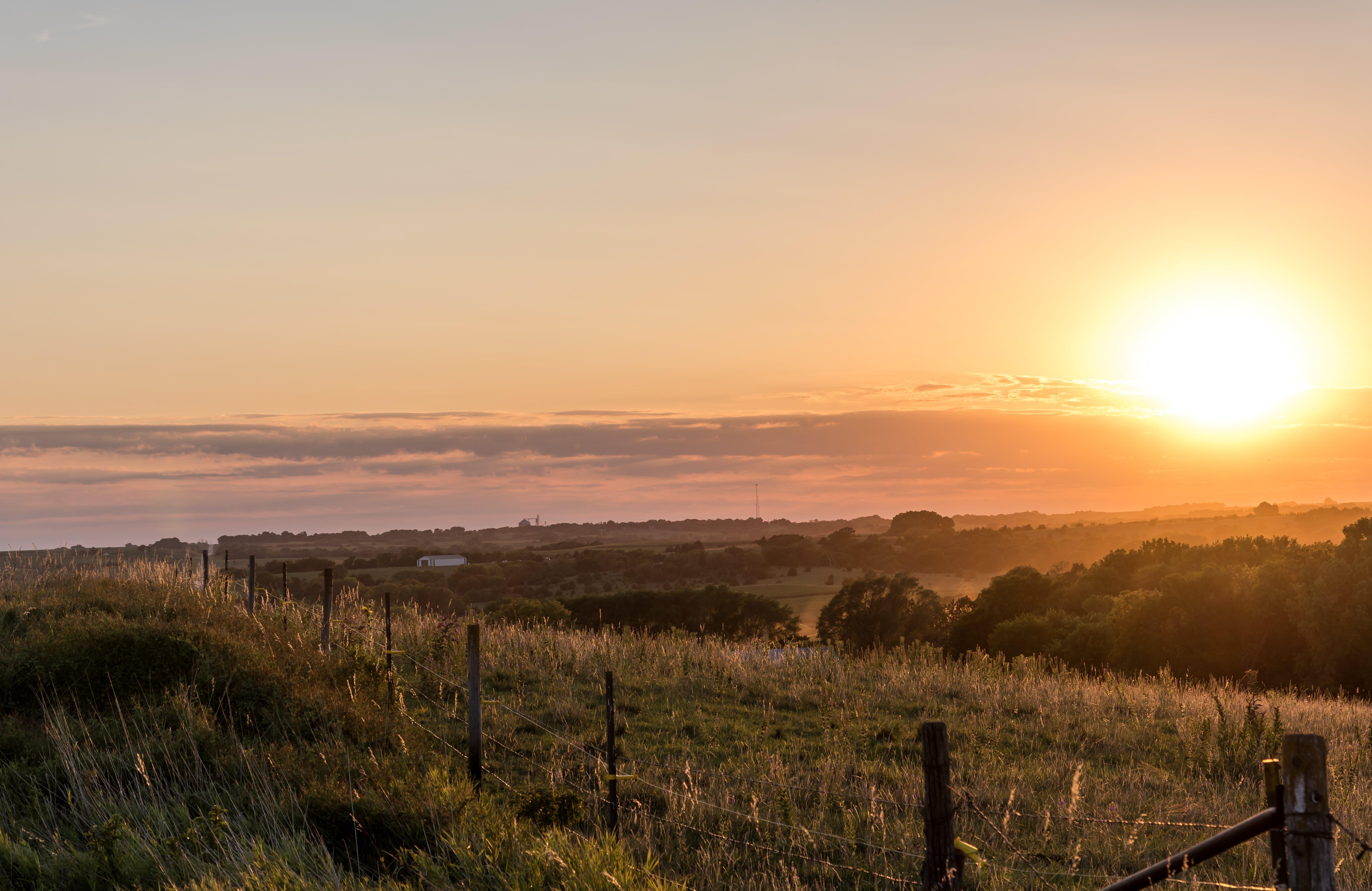 Fotos de stock gratuitas de amanecer, arboles, campo, campo de hierba