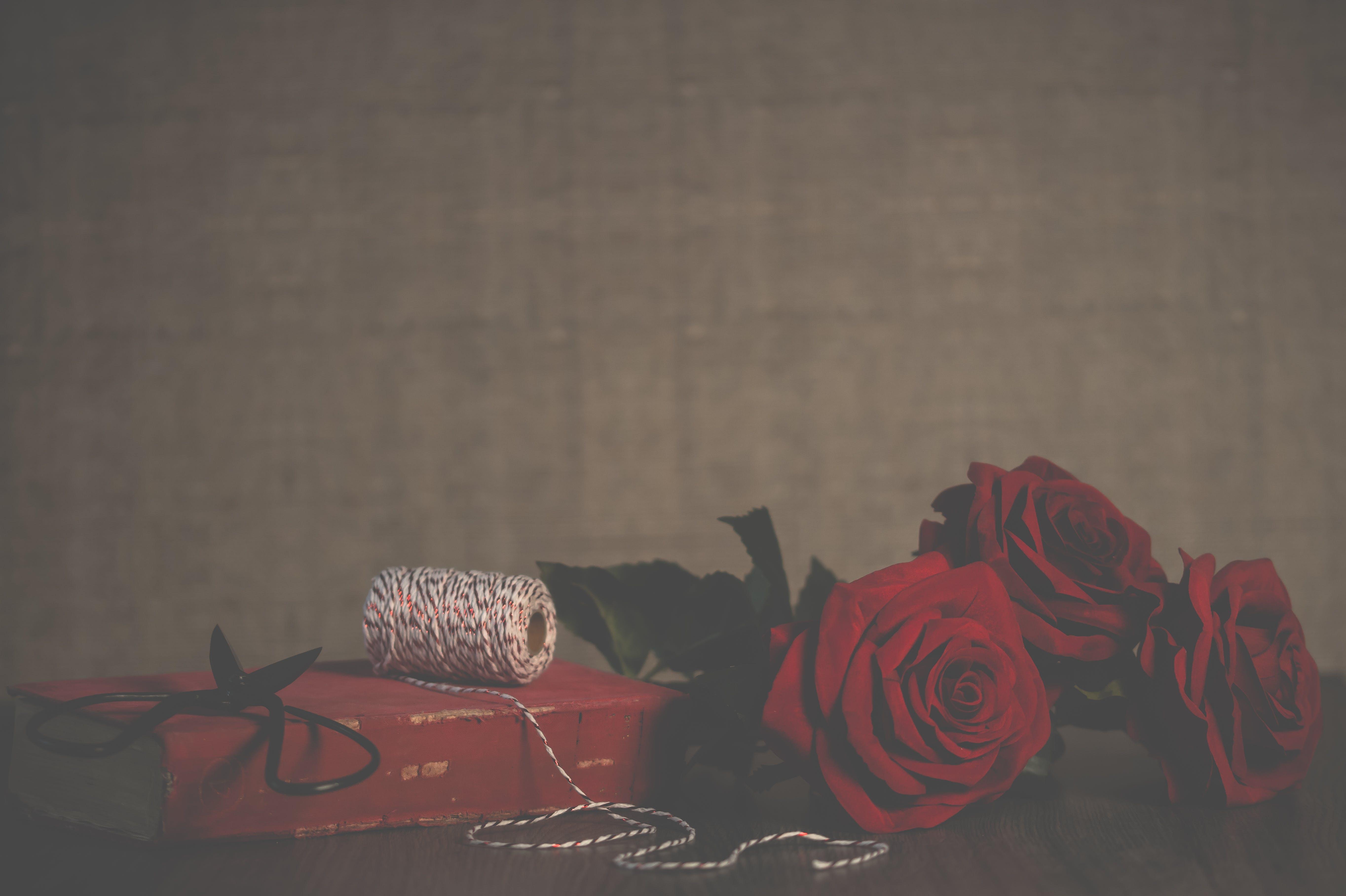 Imagine de stoc gratuită din aspect, ațe, culori, flori