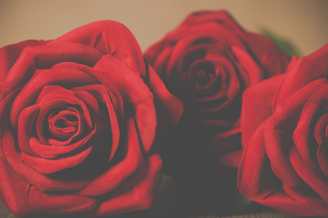 Three Red Petaled Rose Flowers