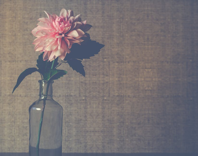Clear glass flower vase with pink dahlia flower in bloom