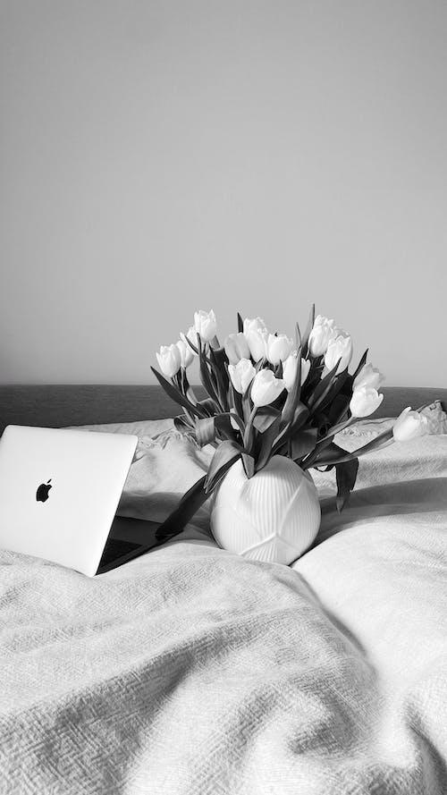 Ingyenes stockfotó ágy, ajándék, belső témában