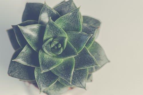 Kostnadsfri bild av färger, form, leafs, makrofotografi