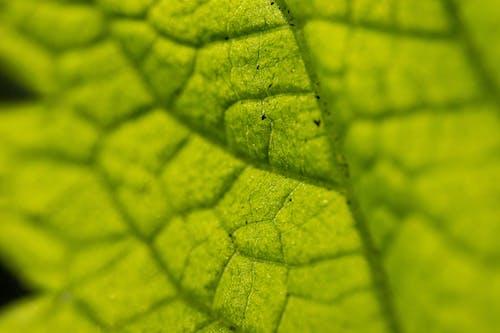 녹색, 시맥, 이파리의 무료 스톡 사진