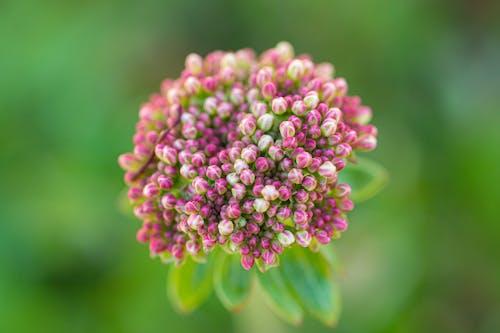 관목, 기쁨, 꽃의 무료 스톡 사진