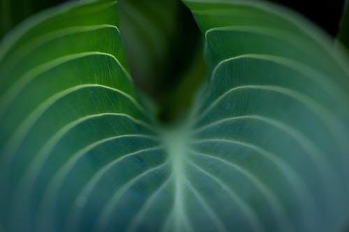 나뭇잎, 녹색, 매크로의 무료 스톡 사진
