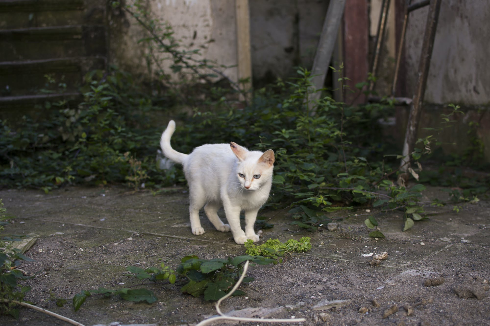 Free stock photo of abandoned, animal, architecture, building