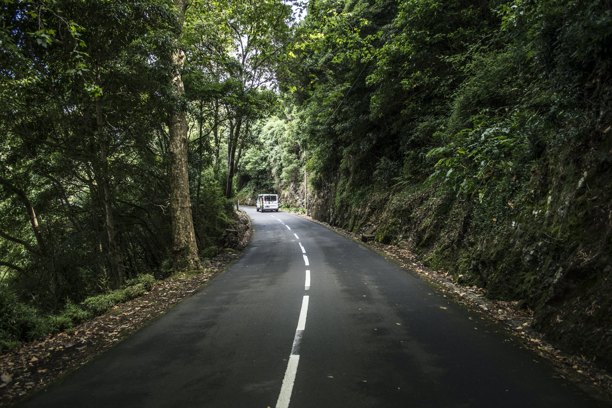 Free stock photo of green, nature, pexels, road