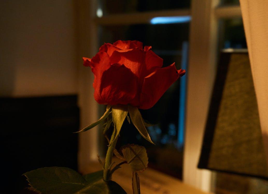 ดอกกุหลาบ, โรแมนติก