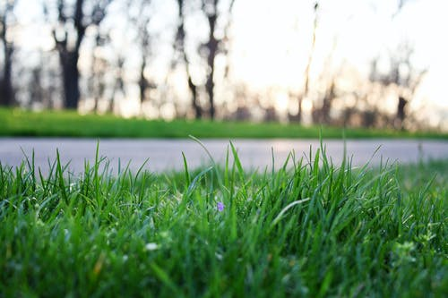 Photos gratuites de chemin, croissance, herbe, moulu