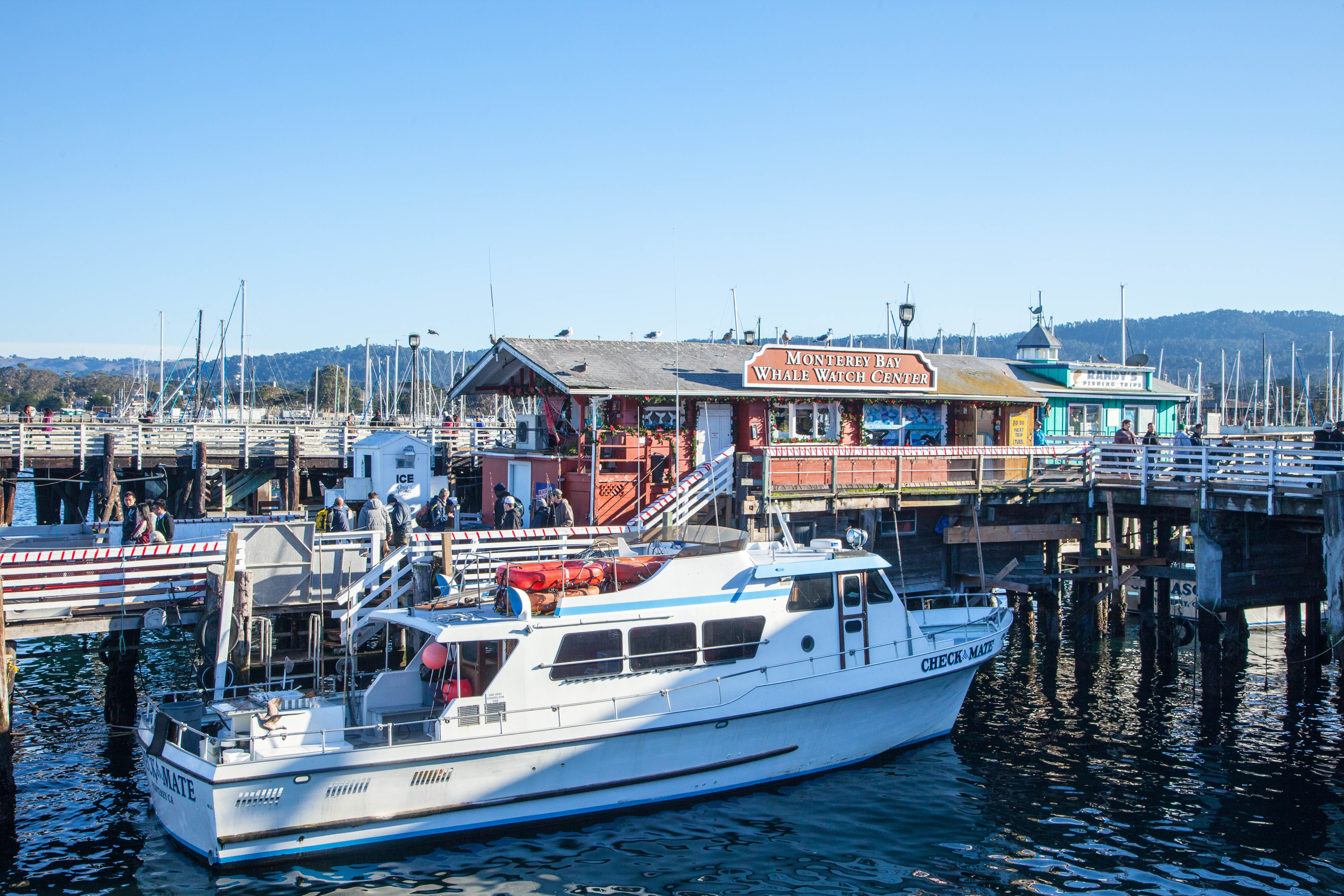Free stock photo of boat, pier, whale watching, wharf