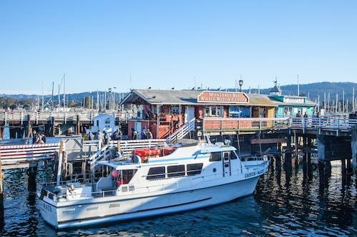 码头, 碼頭, 观赏鲸鱼 的 免费素材照片