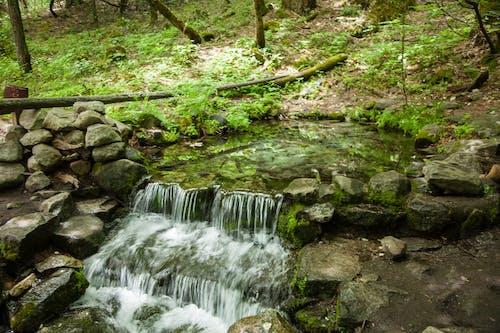 Gratis arkivbilde med foss, liten elv, littel foss, rennende vann