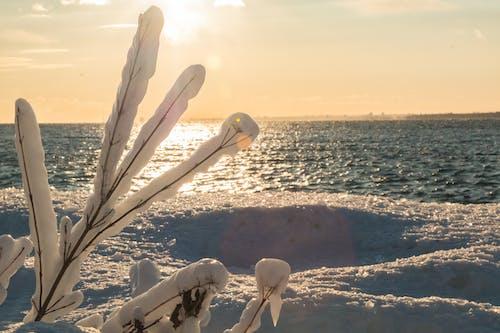 Ilmainen kuvapankkikuva tunnisteilla jää, jäätynyt, Kanada, ontario-järvi