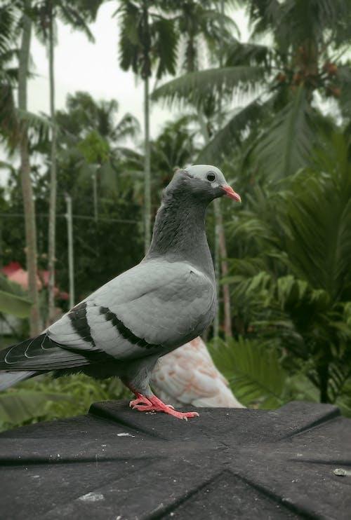 Free stock photo of animal photography, beautiful animal, beautiful background