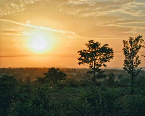 Бесплатное стоковое фото с дерево, золотое солнце, кемпинг, композиция
