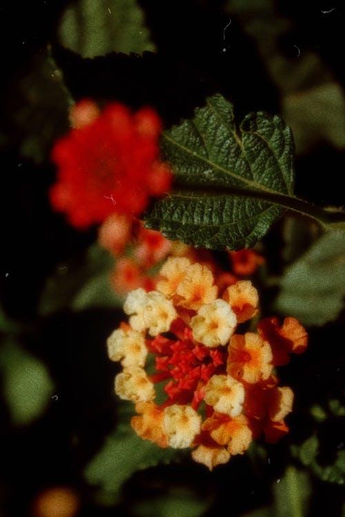 คลังภาพถ่ายฟรี ของ กลางแจ้ง, กลีบดอกไม้, การถ่ายภาพ