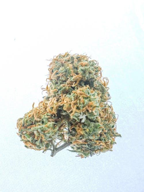 Gratis arkivbilde med cannabis, cannabis blomst, cannabis kultur