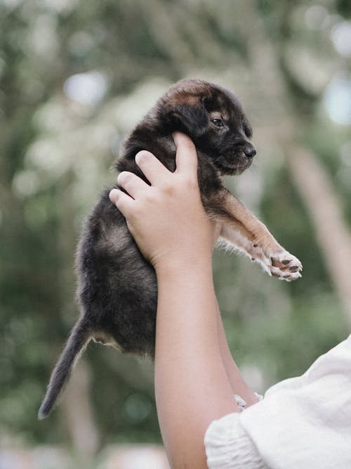 Foto stok gratis anak anjing, anjing, bayi